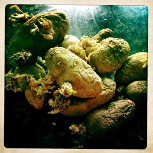 forgotten potatoes