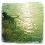 Swimming, Shelby Farms, November 2012
