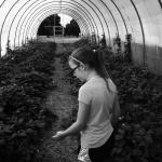farm tour, august 2013