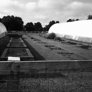 grahamwood farm, august 2013