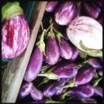summer eggplant