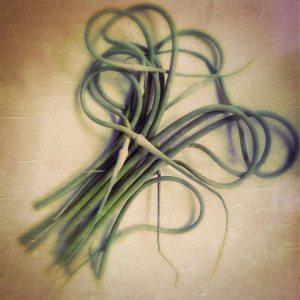 garlic May 2014