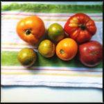 Tomato Variety July 2014