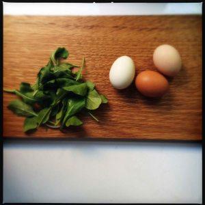 Eggs and arugula August 2014