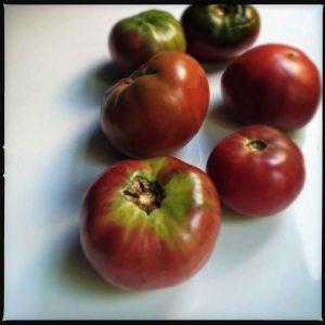 Purple tomatoes August 2014