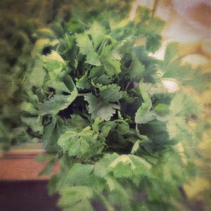 True Vine celery
