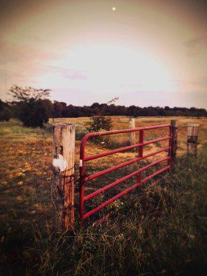 Shelby Farms Park 2015